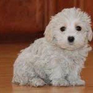 Image Result For Dog Good For Allergies