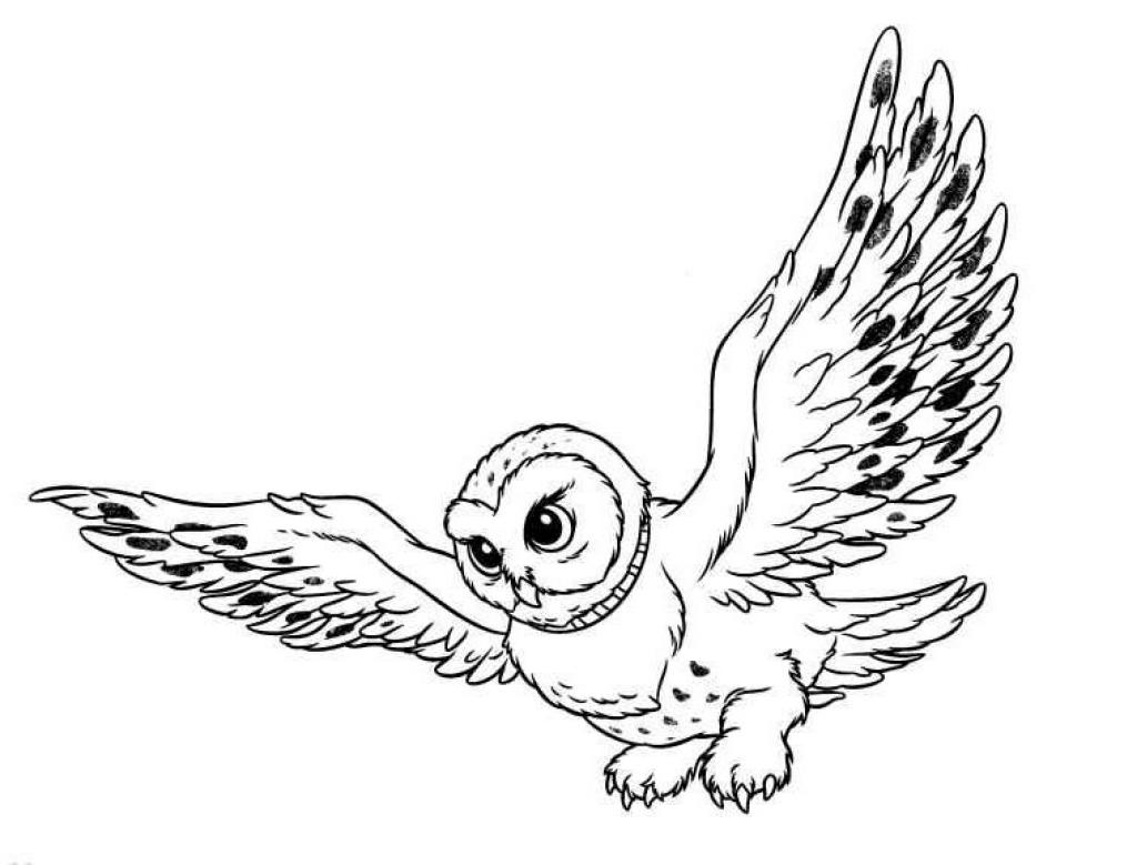 Coloring Pages Owls Animated Images S Pictures Amp Animations