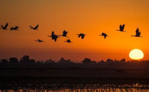 Birds-flying-in-sunset-236256