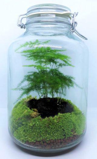 1.Animation-Figurines-Decors---terrarium-asparagus