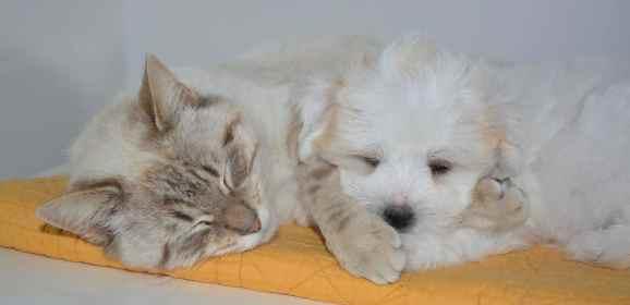 Quand prévenir le vétérinaire : Appeler et prendre rendez-vous de bonnes raisons
