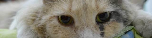 3 comportements du chat à comprendre pour une bonne relation avec lui