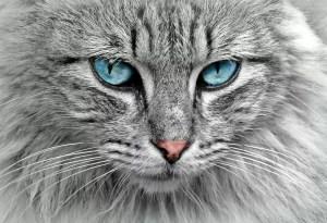 Ce que votre chat veut que vous sachiez