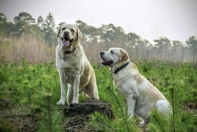 Comment reconnaître une race de chien