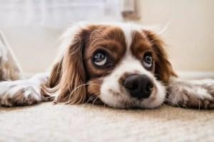 Dix choses importantes que votre chien veut que vous sachiez
