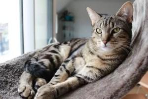 Quel animal de compagnie choisir en appartement