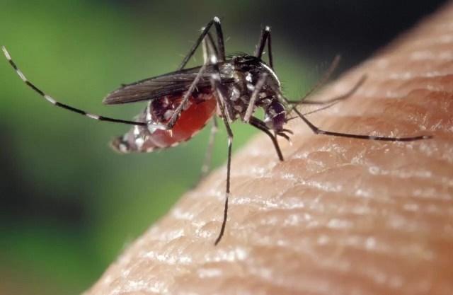 3 astuces pour lutter contre l'invasion des insectes dans une maison
