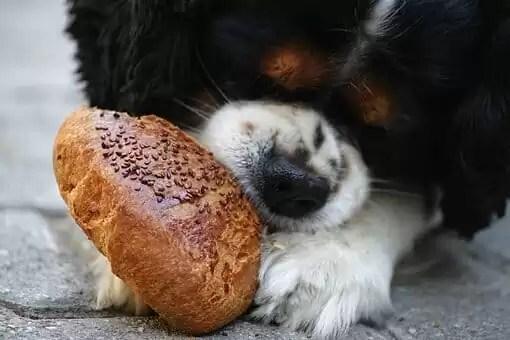 Comment choisir la nourriture de ses animaux de compagnie