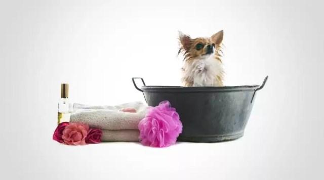 parfumer son chien pour éviter les mauvaises odeurs