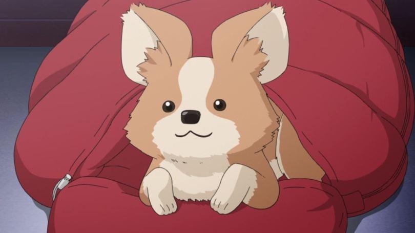 a dog sitting in a sleeping bag