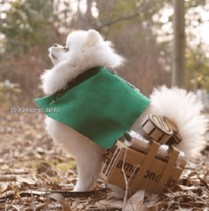 Attack on Pomeranian 001