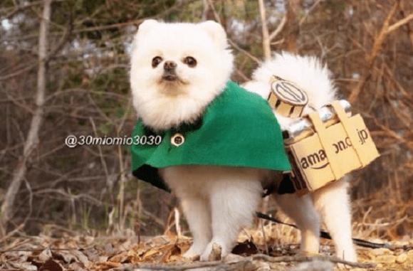 Attack on Pomeranian 002