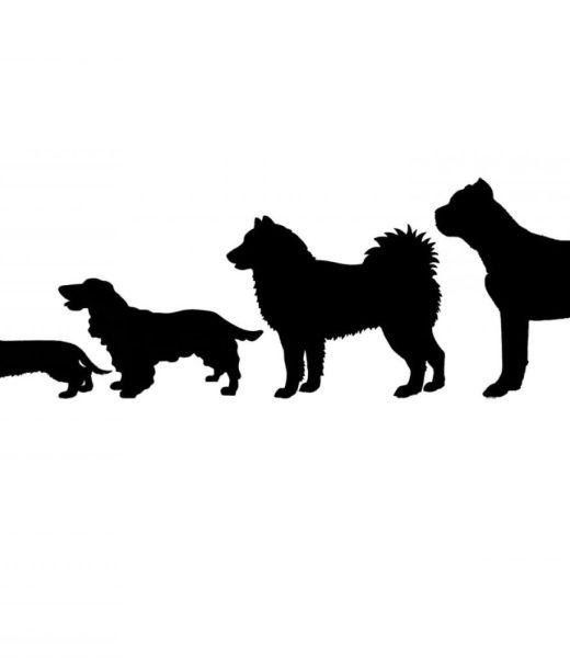 Logo Animinte