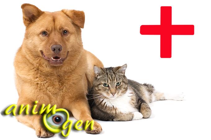Santé : les effets néfastes des produits ménagers sur nos animaux de compagnie