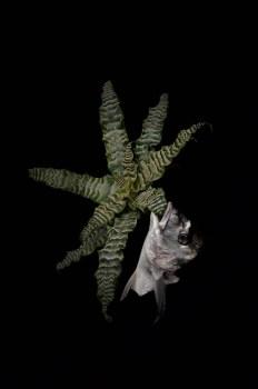 Starfish #2