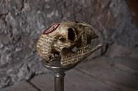 Skull 6