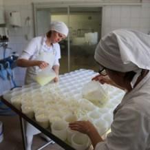 Käseproduktion (1)
