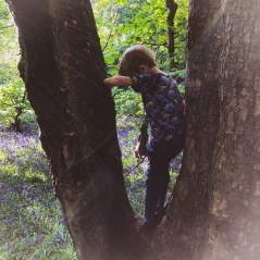Susie Robbins gives ideas for growing resilience through play (picture of child climbing a tree)