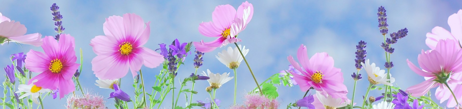 Pink and purple wild flowers