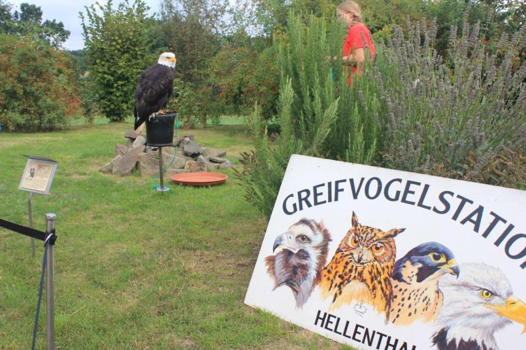 Infoveranstaltung Kinderhospiz Sonnenherz Dortmund - Adlerflugschau der Greifvogelstation Hellenthal