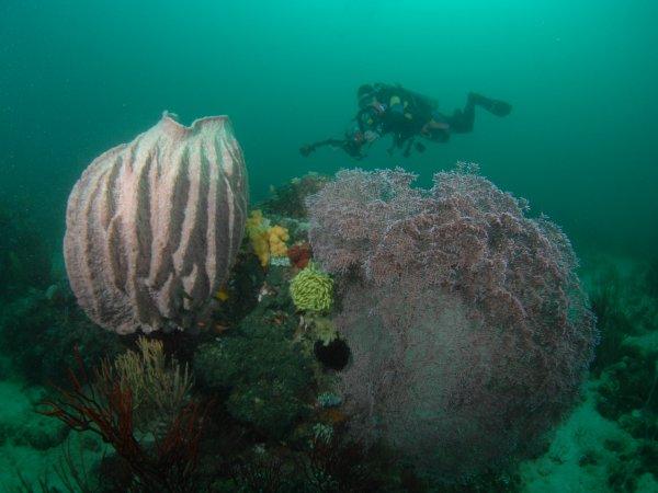 Ankermi Happy Dive In Maumere Dive Sites Around Maumere Bay