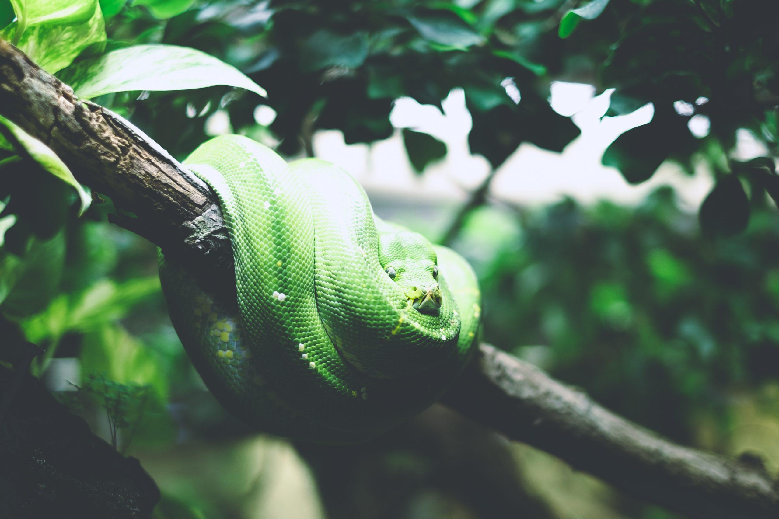 Slinkse slang