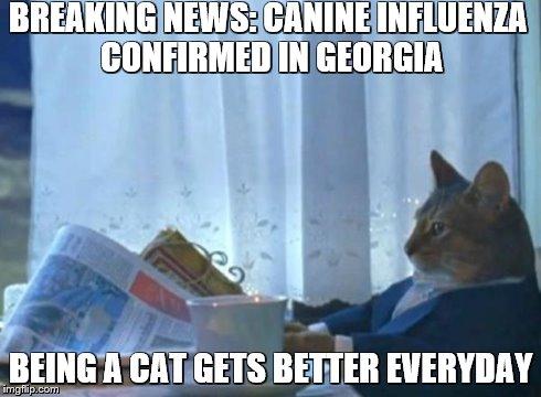canine-influenza