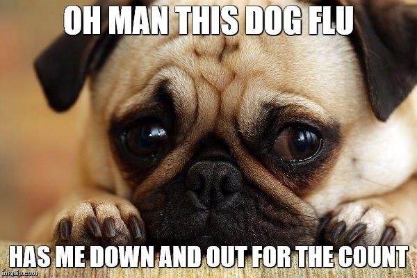dogflu2