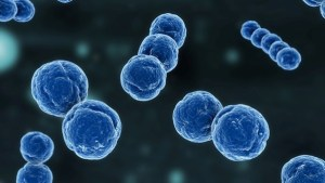 Streptococcus