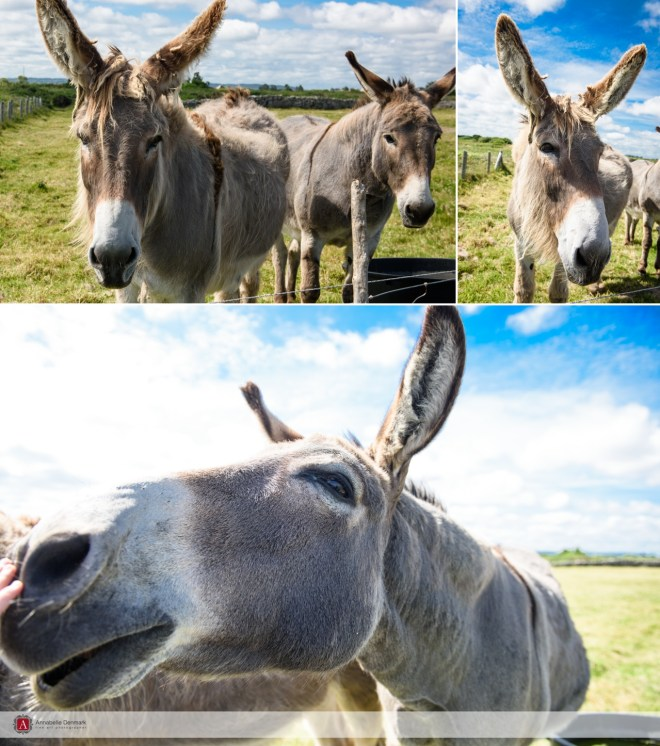 Donkey at the Lighthouse