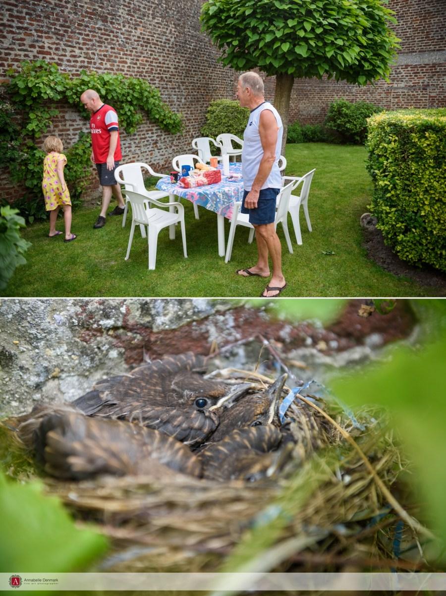 Breakfast and baby birds
