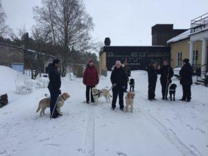 Anna med sin ledarhund och fyra andra ledarhundsekipage.