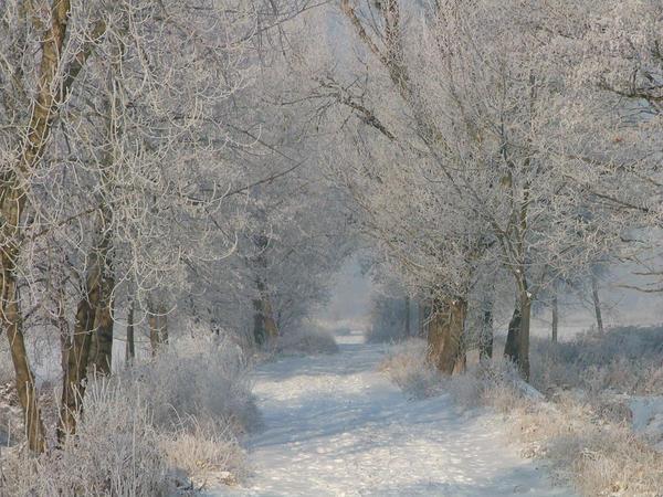 Poland January 2010
