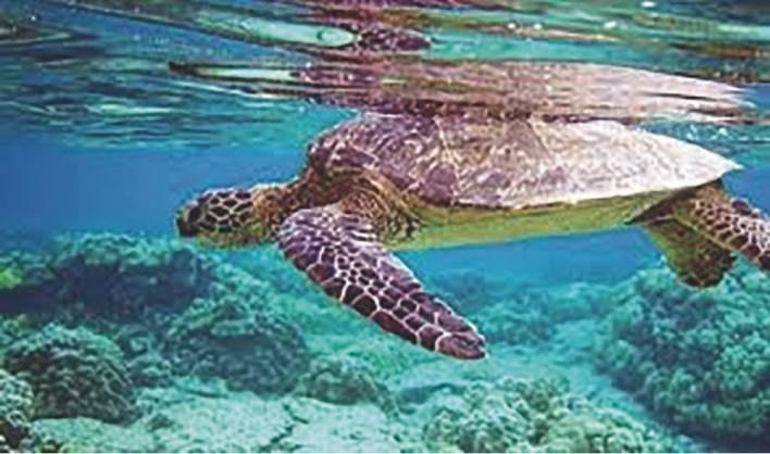 نتيجة بحث الصور عن محمية حماية السلاحف البحرية