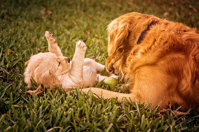 puppy-823190_640