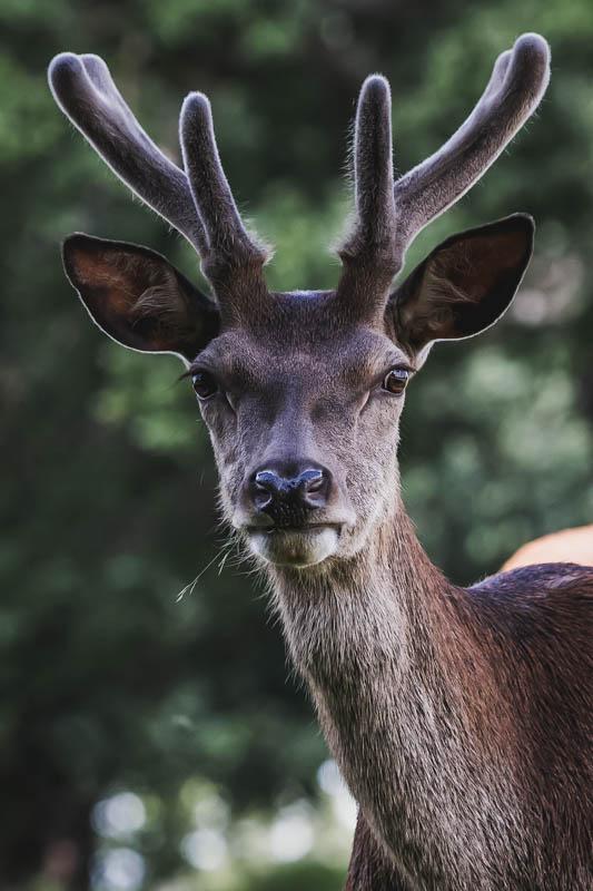 deer's, ducks and a tea dress