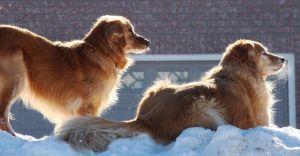 winter-pet-safety.jpg