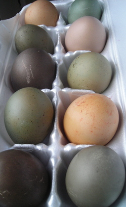 Borden - Easter Eggs dyed with natural colors