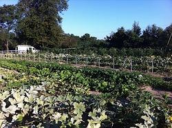 Borden-capellafarm