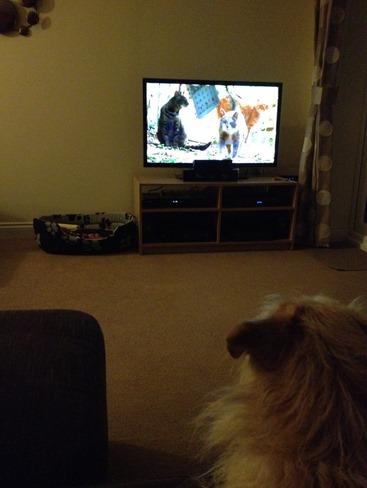 Alfie watching TV