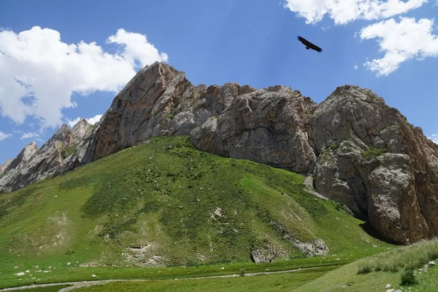 An eagle circling above the mountains of Kyrgyzstan