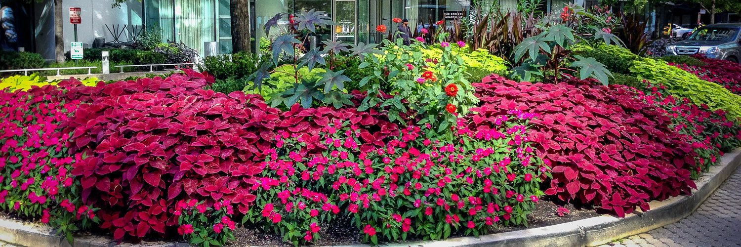 Anne Roberts Gardens commercial-landscaping