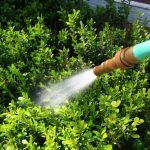 Anne Roberts Gardens deep-watering-150x150