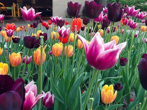 Anne Roberts Gardens main-rot3