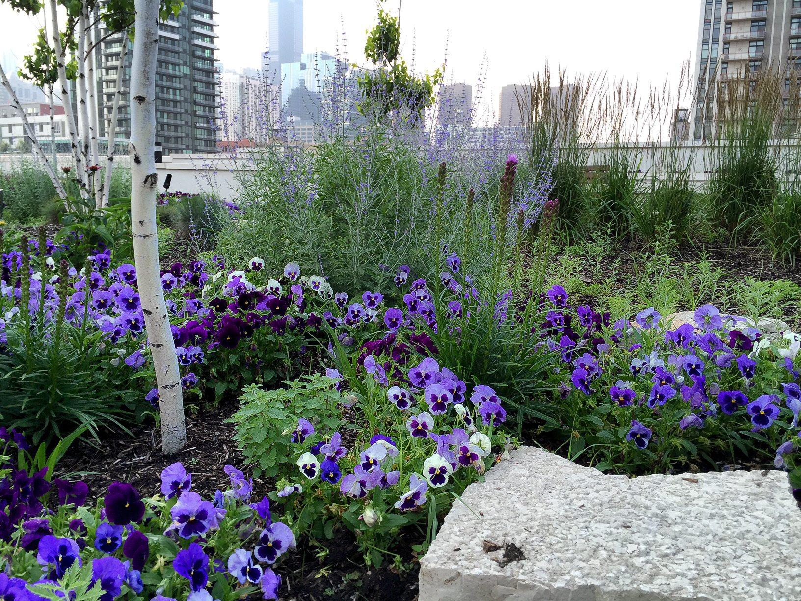 Anne Roberts Gardens rooftop-gardens-4