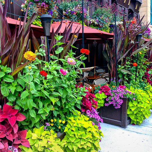 Anne Roberts Gardens seasonal-rotations-4