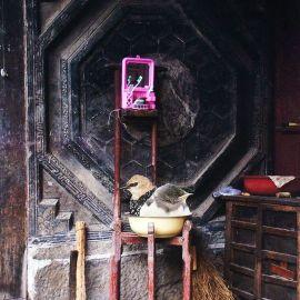 Reisverhalen (Roze toiletkast)