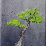 bonsai-ii-2009-443-x-600