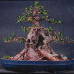 bonsai-iii-2009-600-x-447