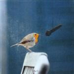 roodborst-microfoon-dsc_3535w